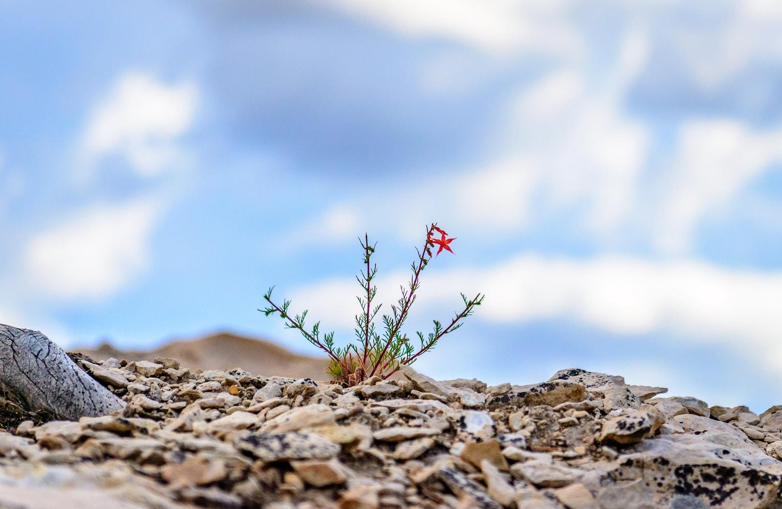 La Resiliencia y el TLP
